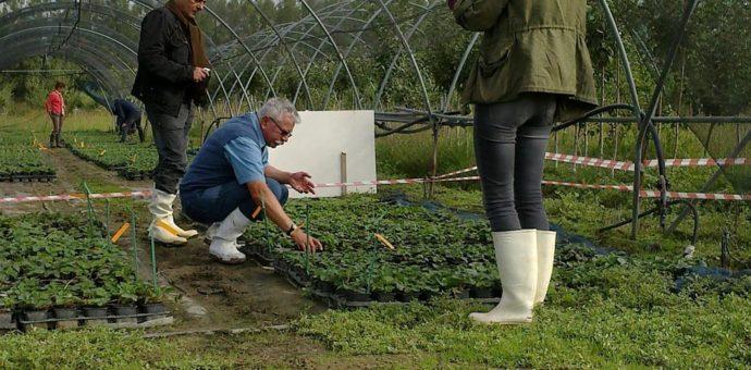 Essais sous abris pour une innovation agricole